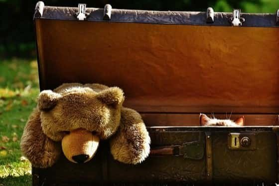 Stuffed animal bear coming out of travel trunk