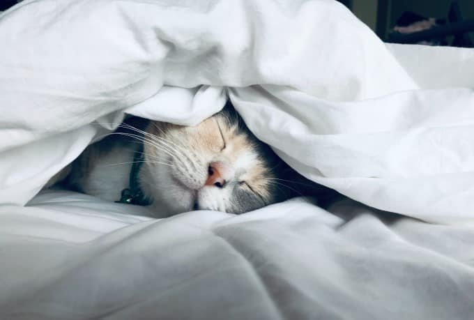 Kitten under the covers sleeping